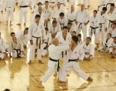 Karate Shoto Camp